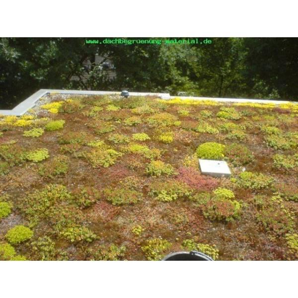100-stuck-dachpflanzen-fur-die-dachbegrunung-sedum