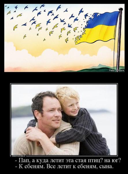 Папа куда летят эти птицы картинка обоев