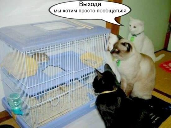 мышонок в клетке