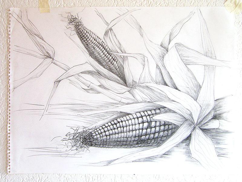 _H103835_kukuruza
