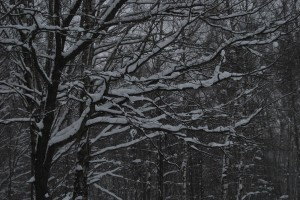 зима 2010 074