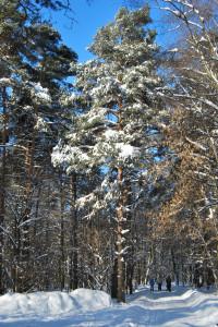 зима 2010 127