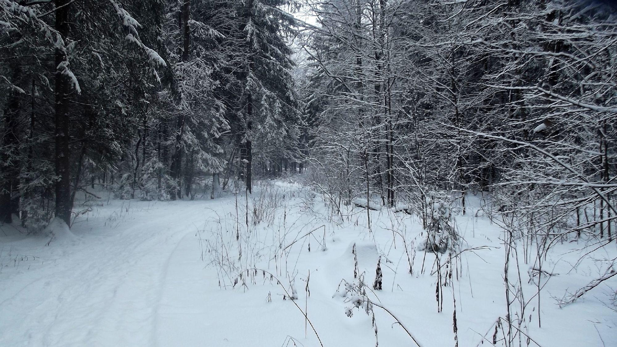 Лес и дорога.