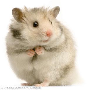 hamster_000002566309