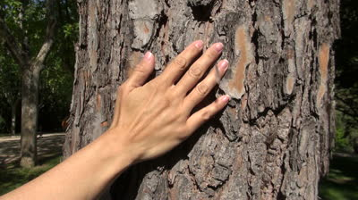 stock-footage-woman-hand-touching-trunk-cork-tree-at-a-park-in-madrid