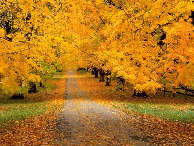 autumn-b-10