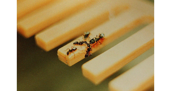 ants_numerical_competence_fig5_600