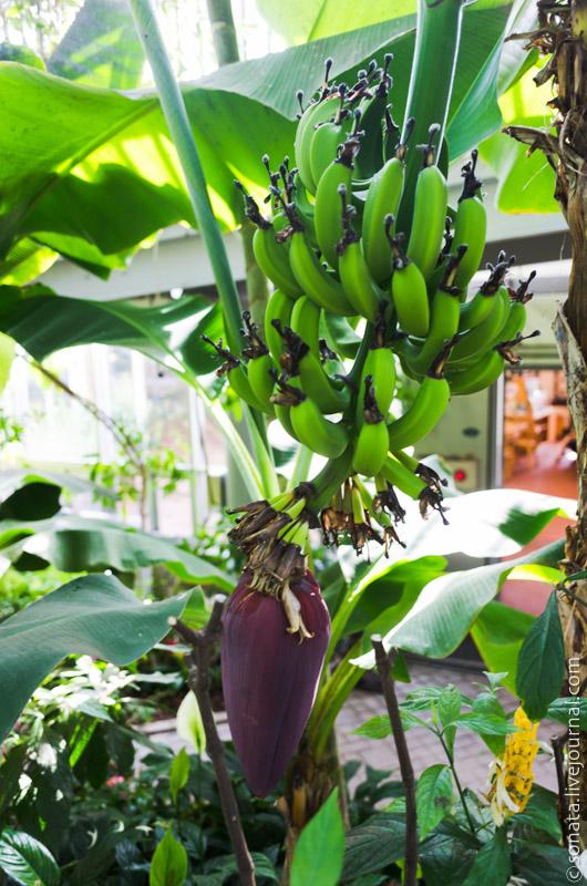 Nunobiki herb garden ботанический сад летом