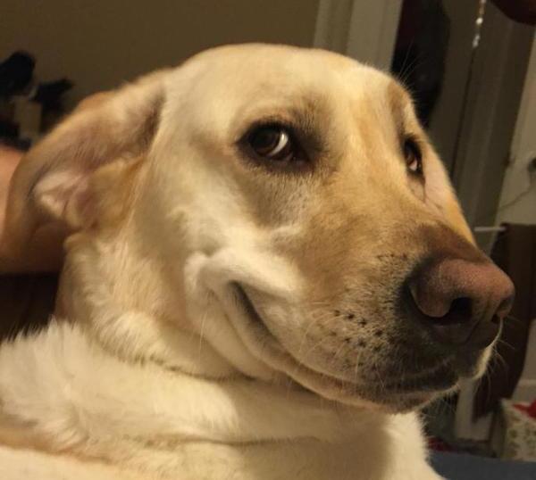 Собака тролль