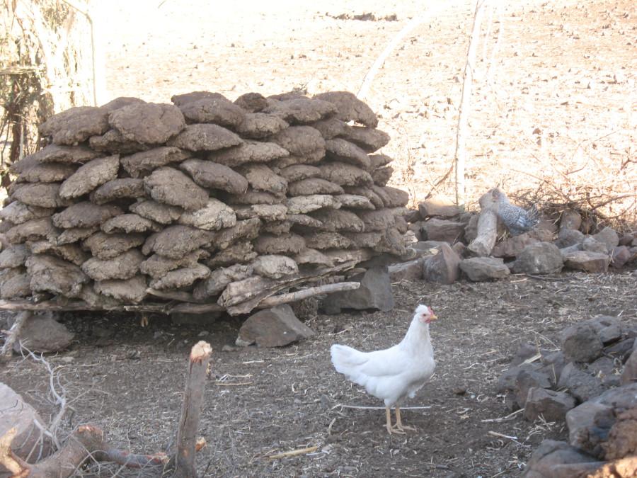 эфиопия 908