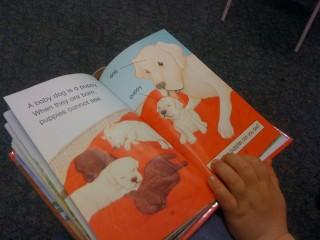 Книга из библиотеки, собака и щенки