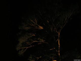 дерево // 1024x768 ~ 69 кб при клике
