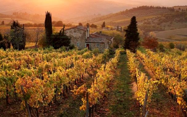 Виноградник Италии