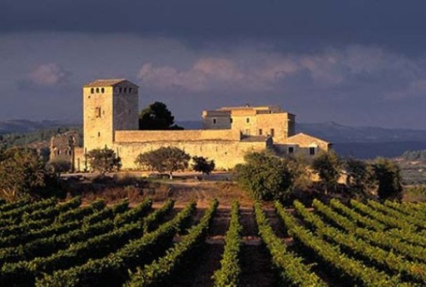Виноградники в Испании