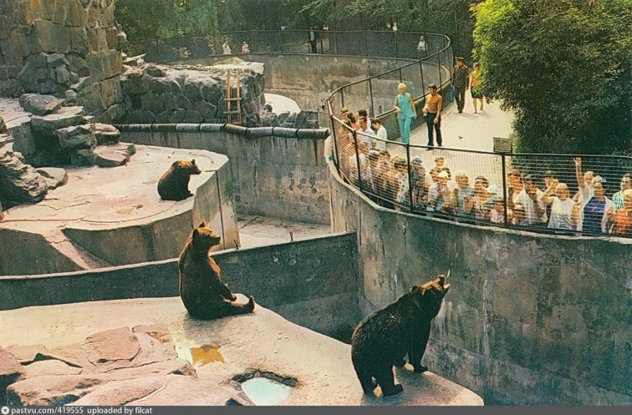 Kaliningrad Zoo. Zoo, of course, living creatures, mosaic, once, War, zoo, beauty, Russia, public, you can easily, zoos, desire, feed, go, characters, walks, people
