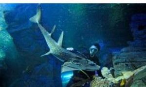 Любовь акулы