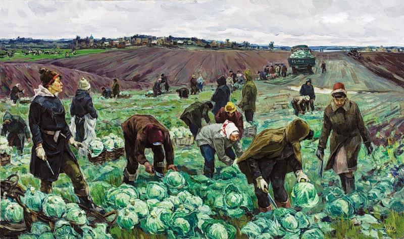 Уборка капусты худ. В. Борисенков, 1958