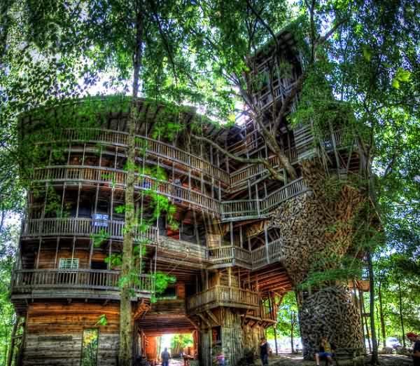 Дом-на-дереве-6