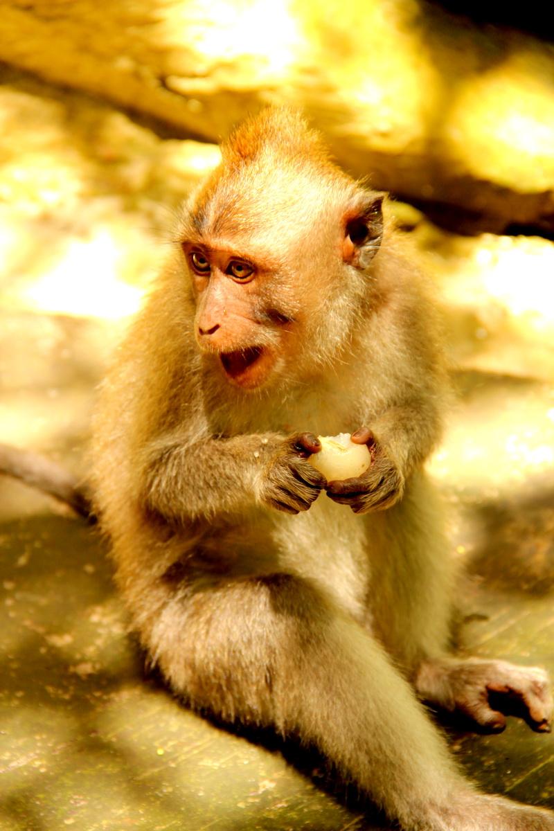 Секс со обезьяной пакистан 1 индонезия 3 малайзия 4