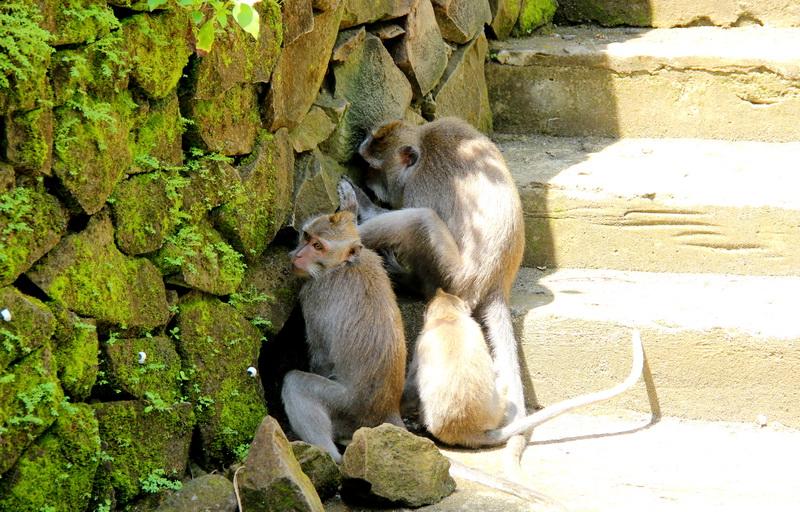 Секс обезьянами в лесах африки и америки