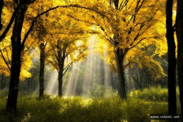 104917401_Sun_rays_002