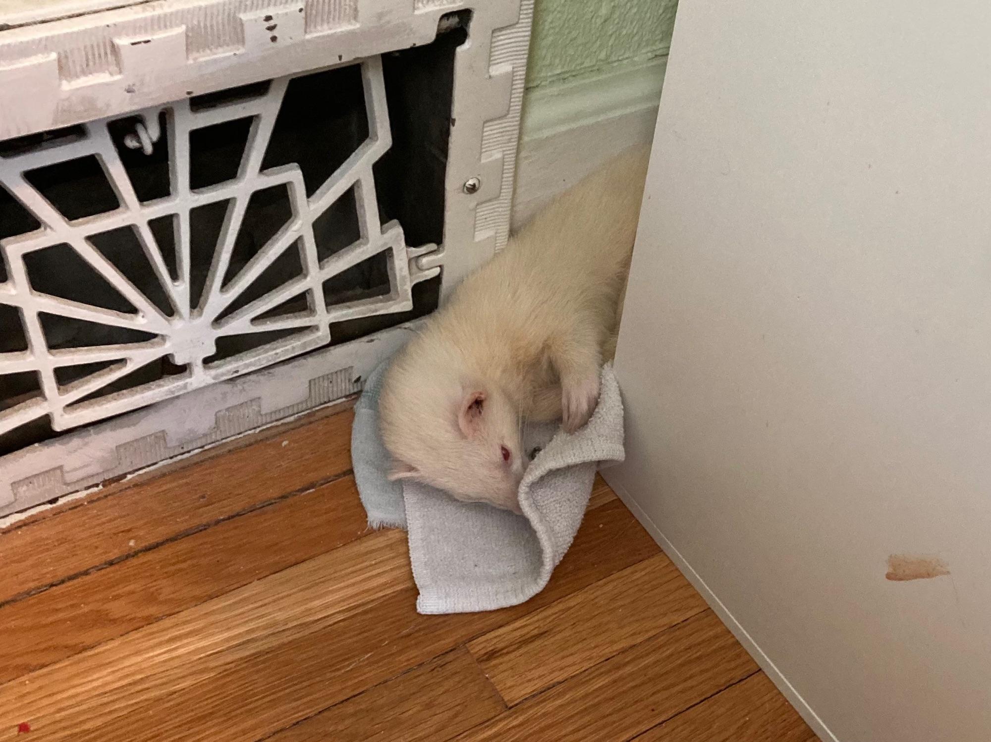 Watson the Weasel