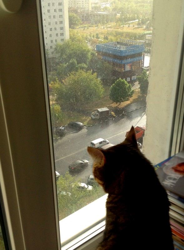 Blind rain_Eroshka