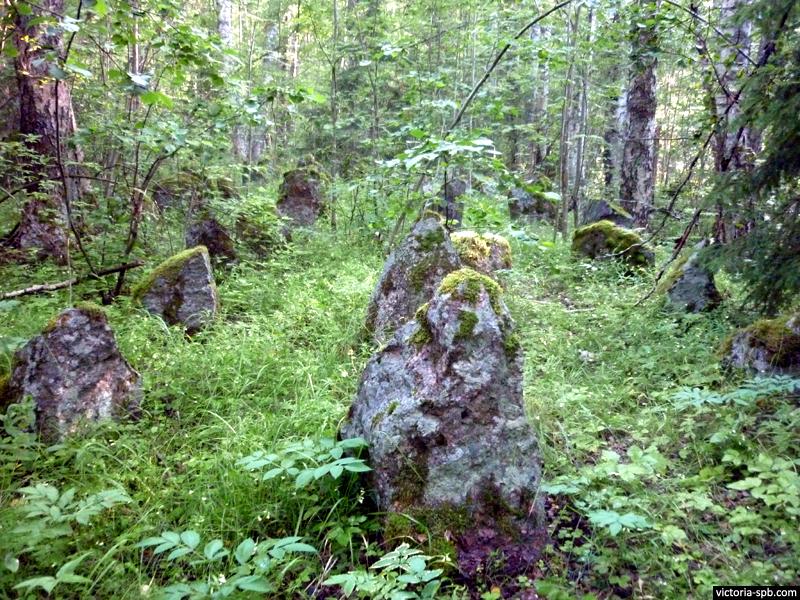 Финские противотанковые надолбы («Зубы дракона»). Линия Маннергейма. Укрепрайон Суурниеми (Suurniemi).
