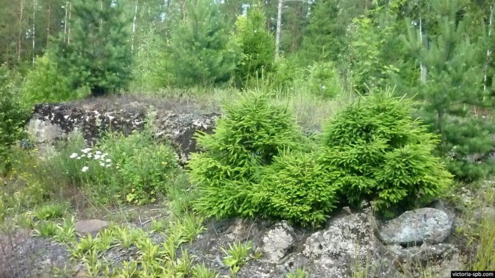 ДОТ Le 4. Укрепрайон Лейпясуо (Leipäsuo). Линия Маннергейма.