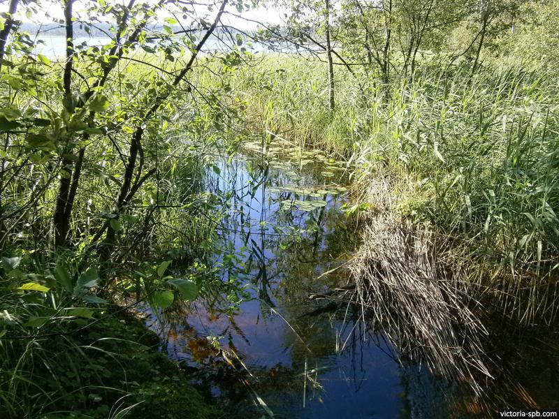 Исток рукава реки Морье