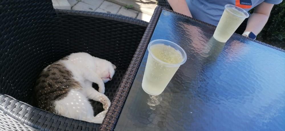 Непоколебимый адлерский котик «Васька»