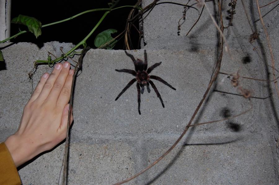 пауки на балконе фото начинаю