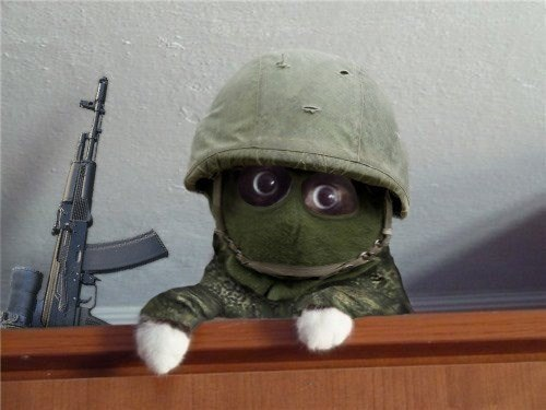 Army_cat