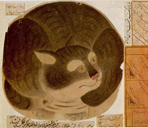 ottoman-cat