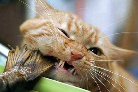 Про очень прожорливого кота