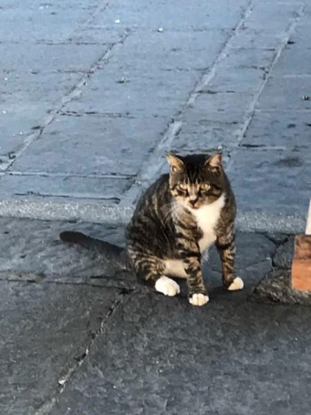 rhoadscat.jpg
