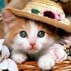 Ki-cute-kittens-9820383-1024-768_zps7c563cbd