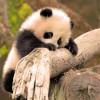 106-bebes-animaux-hyper-craquants-qui-vous-feront-fondre-de-tendresse1