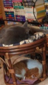 double decker cat