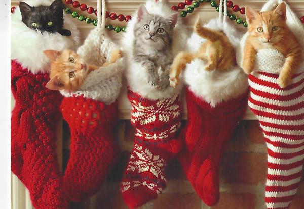 kittensinstockings