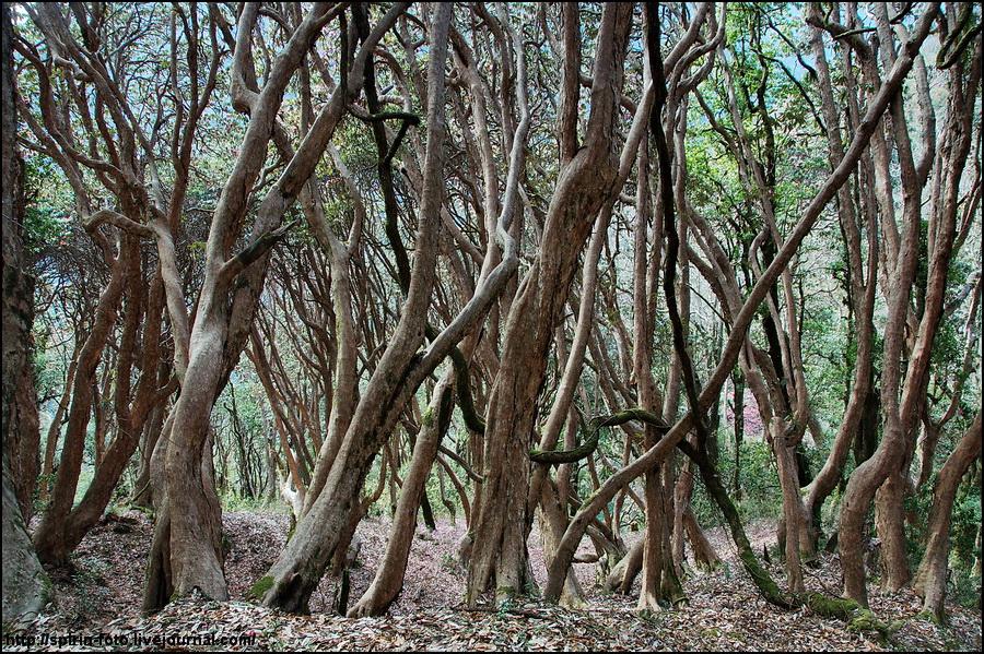 _DSC9432 лес