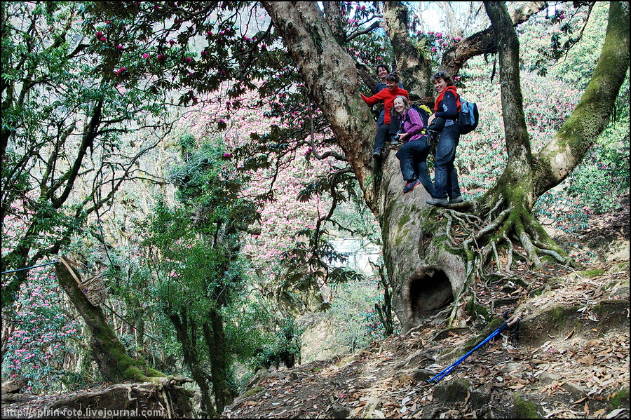 _DSC9433 компания на дереве