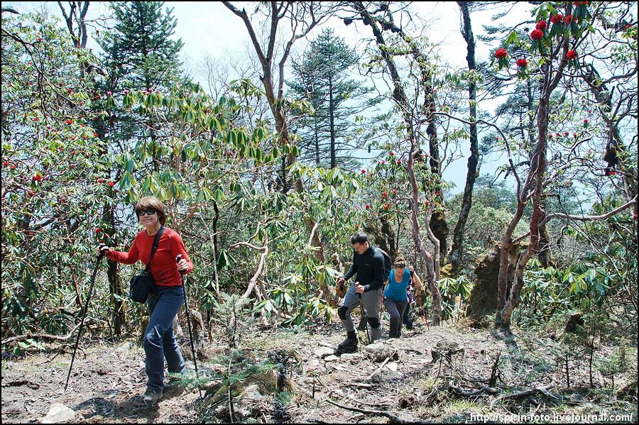 _DSC9539 первый радиальный выход -  в лесу