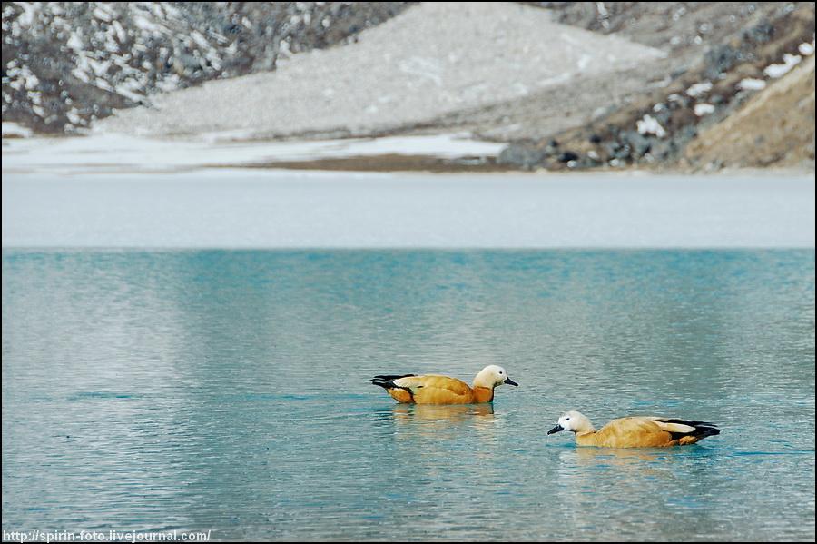 _DSC9903 утки на озере