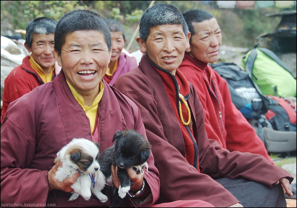 _DSC7182 монашки со щенками 1000