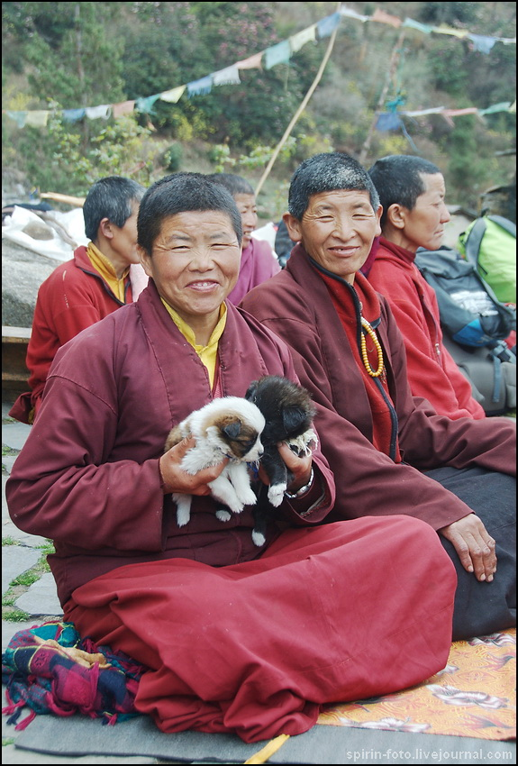 _DSC7179 монашки со щенками