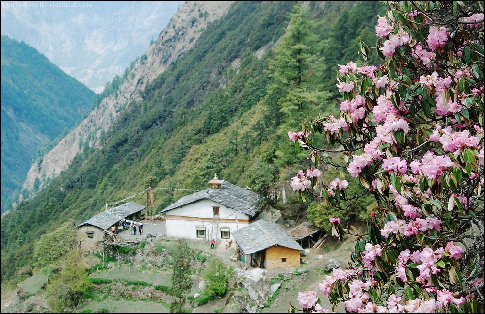 _DSC7123 монастырь в цветах