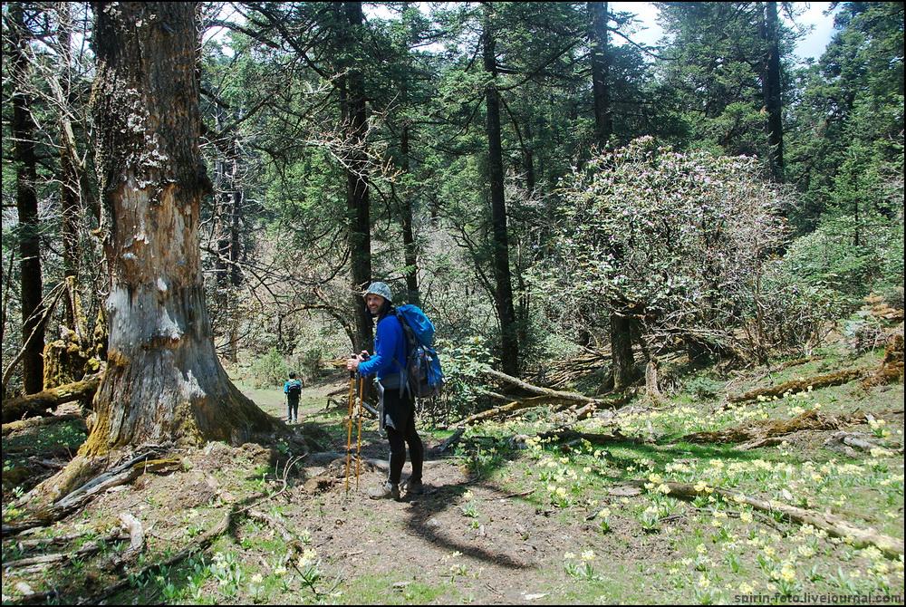 _DSC7231 илья в лесу