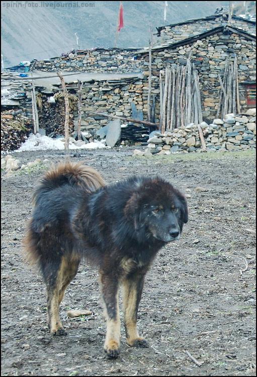 _DSC7633 пес