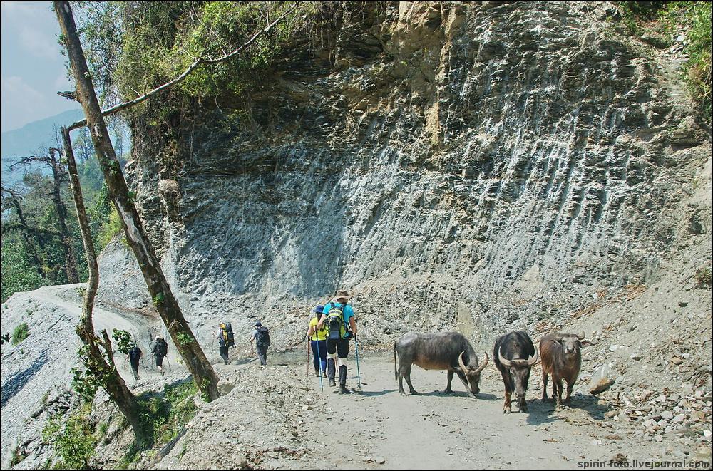 _DSC5815 буйволы